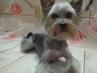 Скачать бесплатно изображение Стрижка собак Стрижка йоркширского терьера в Ростове, 43619370 в Ростове