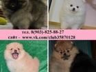 Фото в Собаки и щенки Продажа собак, щенков Продам по минимальным ценам чистокровных в Рыбинске 10000