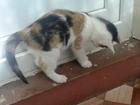 Свежее фото Отдам даром - приму в дар котята ищут пап и мам, Приходите знакомиться, 66483799 в Рыбинске