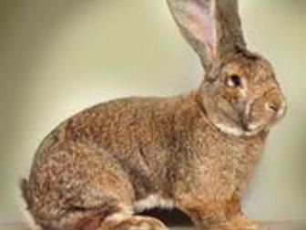 Скачать фото  Кролики 34298034 в Салавате