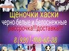 Фотки и картинки Сибирский хаски смотреть в Самаре