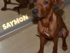 Фото в Собаки и щенки Продажа собак, щенков Очень добрый, ласковый, любвеобильный, послушный в Самаре 15000