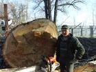 Просмотреть foto  Расчистка дач от кустарников, спил деревьев 39035769 в Самаре
