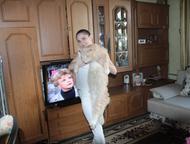 Опытный кот мейн кун Кот 4 года, редчайшего окраса, 12 кг, крупный. Имеет огромн