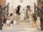 Фото в   Зоогостиница для собак 7км по Мурманскому в Санкт-Петербурге 400