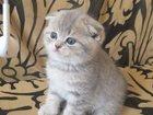 Просмотреть фото Другие животные Продаются шикарные вислоухие котята, 32988266 в Санкт-Петербурге