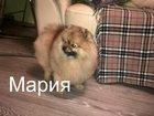 Фото в Собаки и щенки Стрижка собак Предлагаю услуги по уходу за вашими любимцами. в Санкт-Петербурге 1000