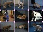 Фотография в Собаки и щенки Стрижка собак Стрижка собак Спб Выезд на дом .   В стоимость в Санкт-Петербурге 0