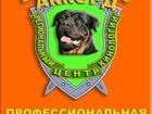Просмотреть foto  региональный центр кинологии Аккорд 34863760 в Санкт-Петербурге