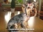 Изображение в Собаки и щенки Стрижка собак Профессиональная стрижка собак и кошек на в Санкт-Петербурге 0