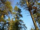 Фото в Недвижимость Земельные участки Предлагаются в продажу 2 чудесных земельных в Санкт-Петербурге 1200000