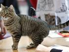 Фото в   Молодой очень красивый и умный кот по имени в Санкт-Петербурге 100
