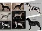 Фотография в Собаки и щенки Продажа собак, щенков Вашему вниманию предлагаю очаровательных в Санкт-Петербурге 50000