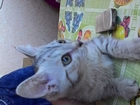 Котенок, девочка ищет свой дом и любящих родителей