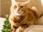Смотреть фото Отдам даром - приму в дар Апельсинка - ваше новогоднее чудо! 68681642 в Санкт-Петербурге