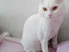 Свежее foto  Стрижка кошек и собак, Любые породы, Без наркоза, Выезд на дом, 69247972 в Санкт-Петербурге