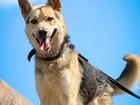 Свежее изображение  Великолепный пёс-акробат ищет дом 69800374 в Санкт-Петербурге