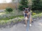 Скачать бесплатно фото  Идеальная собака-анитридепрессант ищет дом 69958775 в Санкт-Петербурге