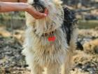 Увидеть фотографию Отдам даром - приму в дар Классный и оригинальный пёс Толян 70262884 в Санкт-Петербурге
