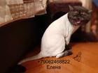 Смотреть foto Услуги для животных Стрижка кошек Выборгский район 72407928 в Санкт-Петербурге