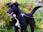 Смотреть изображение  Идеальная собака с чудесным характером 72611278 в Санкт-Петербурге