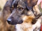 Уникальное фотографию Отдам даром - приму в дар Адекватный и общительный молодой пёс в семью 72825304 в Санкт-Петербурге