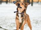Просмотреть фото Отдам даром - приму в дар Небольшая ласковая собачка ищет дом 73413055 в Санкт-Петербурге