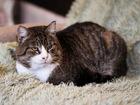Свежее фотографию  Внушительный кот ищет дом 73563348 в Санкт-Петербурге