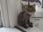 Уникальное изображение Услуги для животных Стрижка кошек Спб Центральный район 73670534 в Санкт-Петербурге