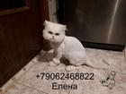 Новое фотографию Услуги для животных Стрижка кошек Спб Выборгский район 73800941 в Санкт-Петербурге