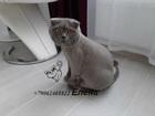 Просмотреть фото Услуги для животных Стрижка кошек Спб Василеостровский район 80450469 в Санкт-Петербурге