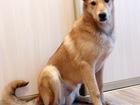 Новое foto  Абсолютно адекватный воспитанный пёс 80791075 в Санкт-Петербурге