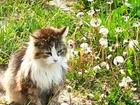 Просмотреть фотографию  Грустный котик, живущий на улице, ищет дом 83623783 в Санкт-Петербурге