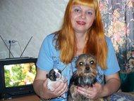 Санкт-Петербург: Китайская хохлатая пуховая - щенки и взрослые Продаются мальчики и девочки Йоркширского терьера. Цена - от 8 тыс. р. Щенки, подростки и взрослые. Окра