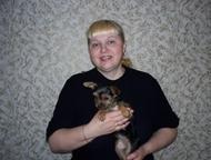 Ветеринарная помощь Повяжу собак любых пород, мелких или крупных! При необходимо