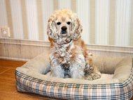 Санкт-Петербург: Домашняя передержка животных В семейной обстановке позабочусь о вашем любимце во время вашего отсутствия. Обеспечу индивидуальный уход, в полном соотв