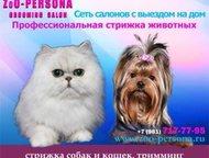 Стрижка и тримминг собак всех пород и кошек с выездом на дом по Санкт-Петербургу
