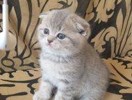 Продаются шикарные вислоухие котята Малышам 2, 5 месяца, приучены ко всем хороши