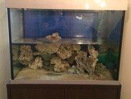 Аквариум продам Продам аквариум в отличном состоянии, без тумбы, р-р Д*Г*В 1, 0х