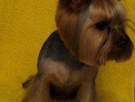 Стрижка собак Выезд на дом в любой район СПб Стрижка собак  В стоимость стрижки