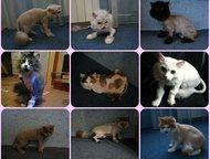 Стрижка кошек собак Выезд в любой район Спб Стрижка собак Спб Выезд на дом .   В