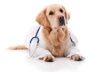 Ветеринарная помощь на дому, все районы СПб Частный врач-ветеринар, стаж более 2