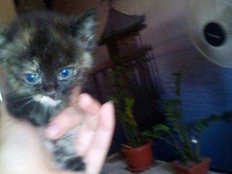 Свежее foto Отдам даром Отдам котенка в добрые руки 33317286 в Саранске