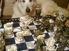 Изображение в Собаки и щенки Продажа собак, щенков Ищем доброго хозяина для маламута. Добрый, в Саратове 0