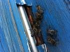 Просмотреть фотографию Другие животные Продаю пчелосемьи (Саратовская обл, Б, Карабулак) 34994930 в Саратове