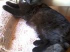 Скачать фото Находки найдена пушистая черная кошка 35287855 в Саратове