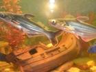 Фотография в Рыбки (Аквариумистика) Аквариумные рыбки размер рыб 21-22 см в Саратове 1000