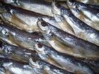 Скачать изображение Разные мясные продукты Лещ, вобла, чехонь другая рыба 56448308 в Саратове