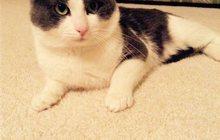 в добрые руки красивого котика-1, 5 года