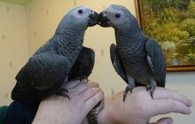 Продам крупных и средних попугаев различных видов